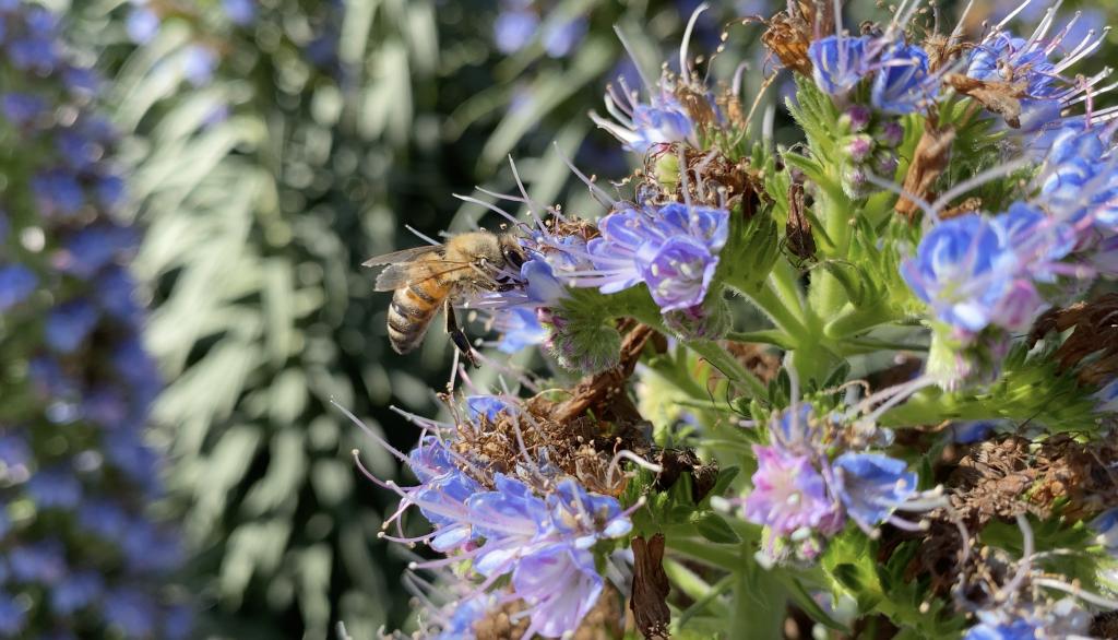 Bee Finding Pollen in Flower
